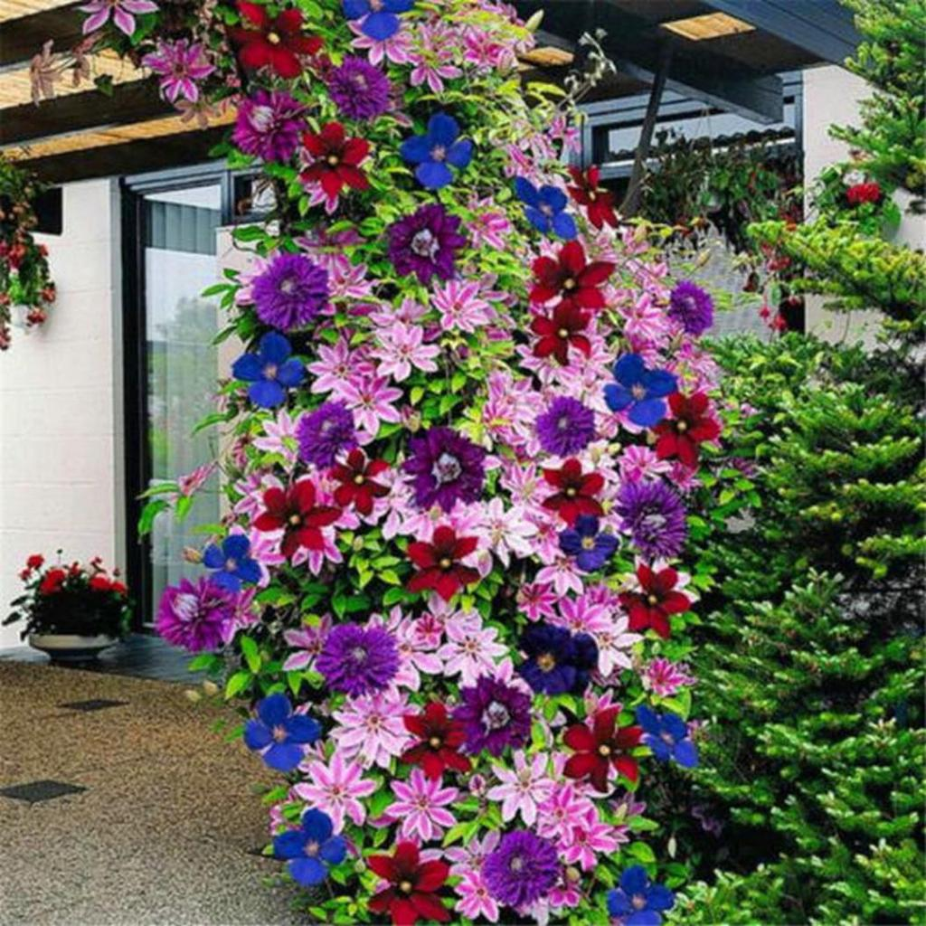 Семена и фото вьющихся цветов