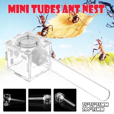 Ant Nest ant Farm Formicarium Acrylic Educational Test Tube Moisture Insect Ant