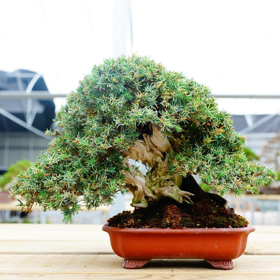 office bonsai. Office Bonsai. 1 Of 2 Bonsai B K