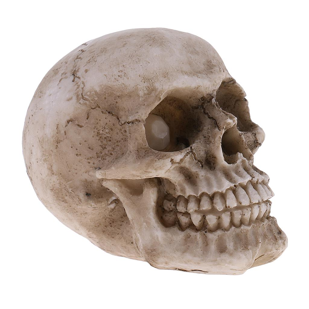 MagiDeal Small Human Head Skeleton Skull Figurines Resin Toy Collectibles