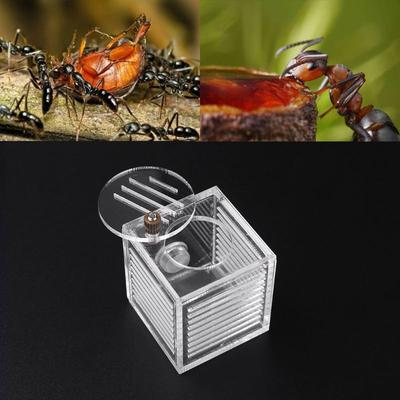 Big 3D Maze Ant Insect Farm Nest House Educational