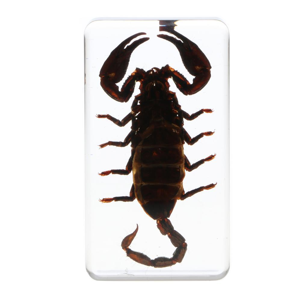 Black Scorpion in Clear Lucite Resin Embedding Educational Real Insect Specimen Scorpions