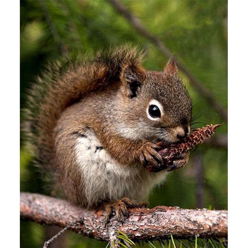 Forest squirrel 5D DIY Diamond Painting