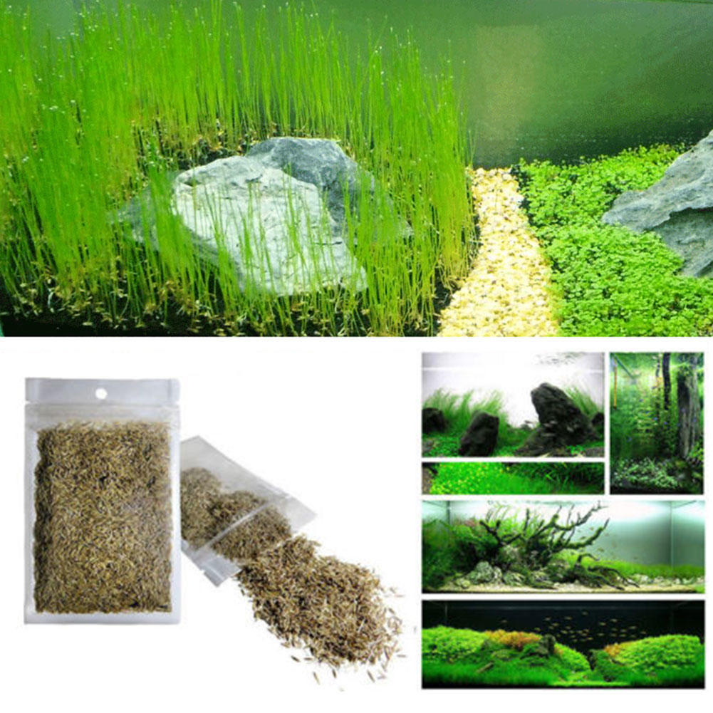 Plante graine aquarium poisson r servoir plantes for Plantes achat en ligne