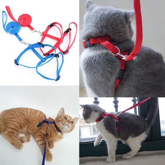Нейлоновая регулируемая шлейка с поводком для кошек и собак – купить по низким ценам в интернет-магазине Joom
