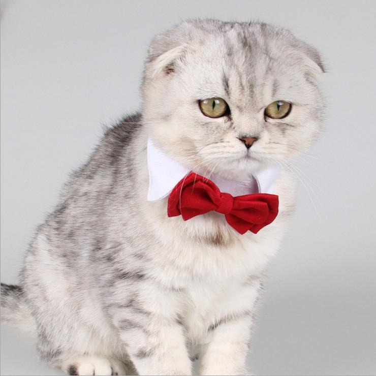 3Pcs Pet Puppy Kitten Dogs Cat Adjustable Bow Tie Collar Necktie Bowknot Holiday