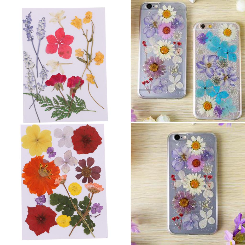 Assorted Pressed Leaves Real Dyed Dried Flowers DIY Floral Decor Card Making