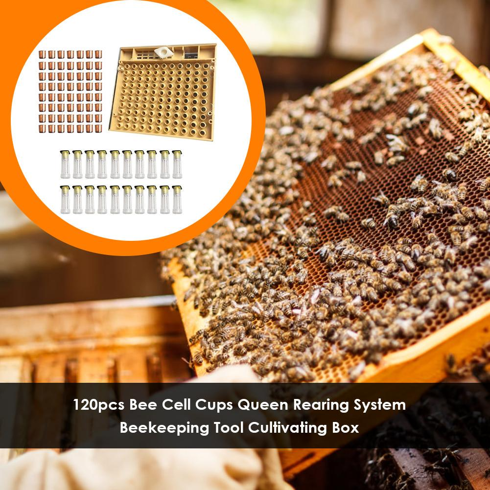 100 Pieces Royal Queen Bee Rearing Raise Cell Cup Beekeeping Tool Beekeepers