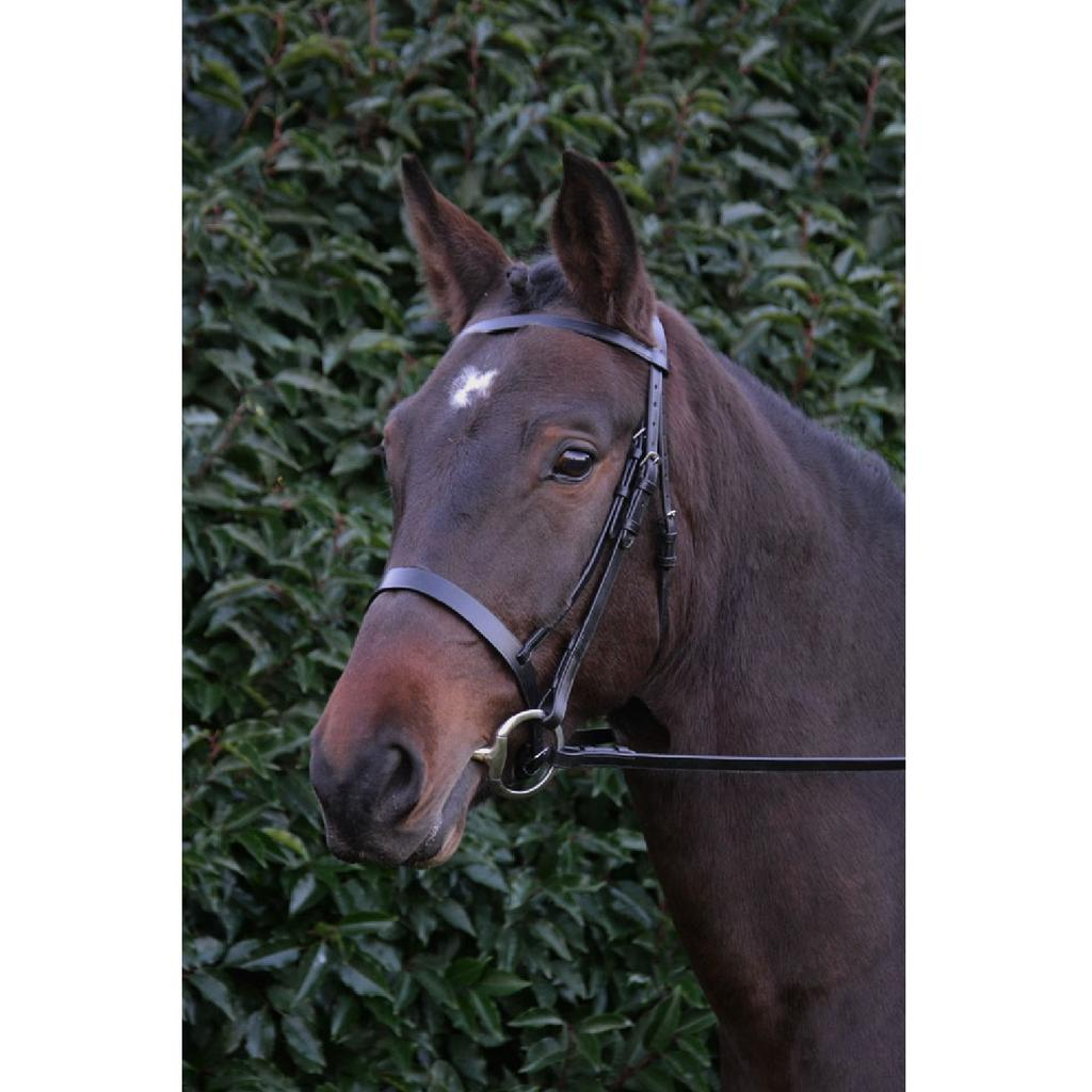 Hy Plain Leather Reins