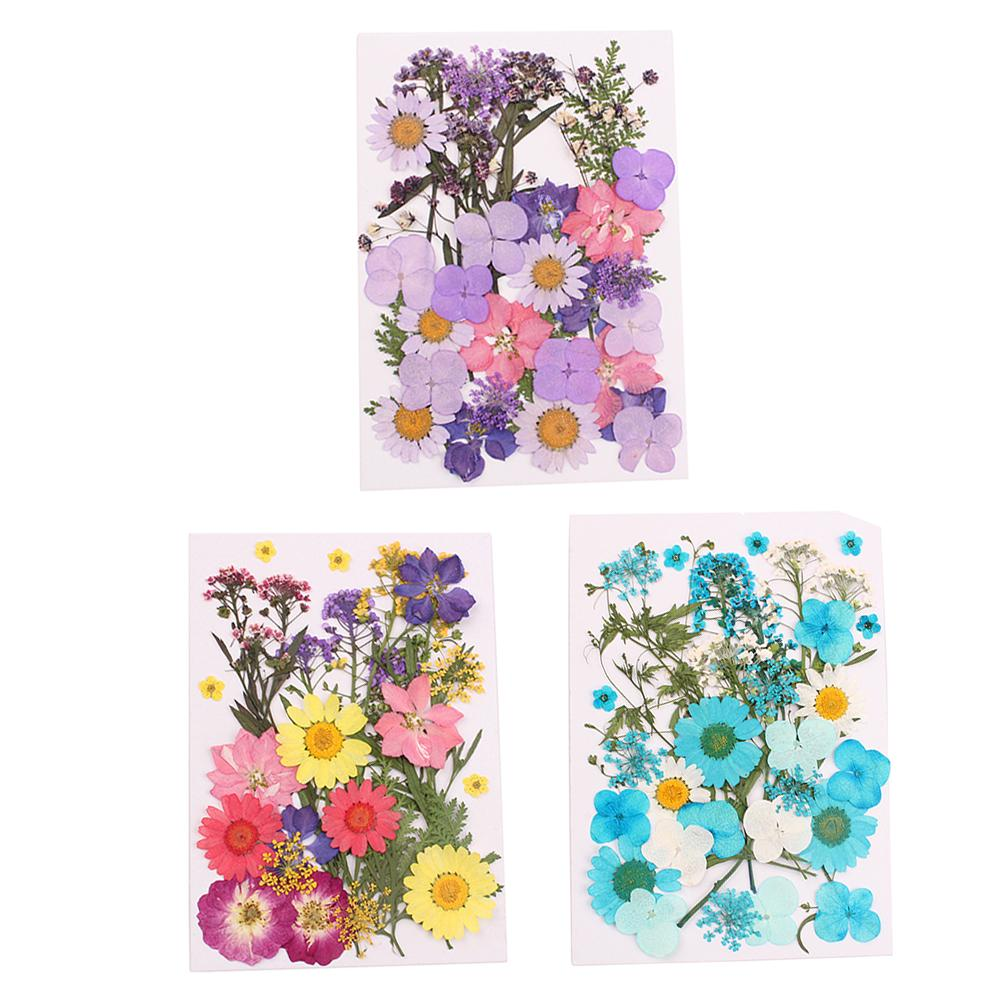12x Pressed Flowers Real Natural Organic Dried Flower DIY Floral Decor Craft