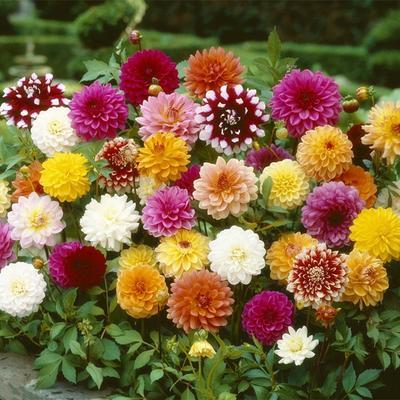 Artificial Flowers Fragrant Blooms Hangings Morning Flower Plant Supports Plant Supports Plant Supports Plant Supports