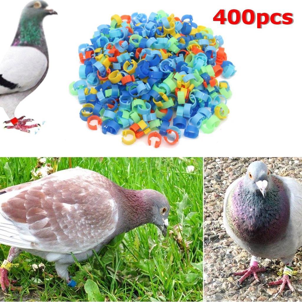 20 Pcs 3 mm Green Bird Ring Leg Bands Parrot Finch Canary Grouped