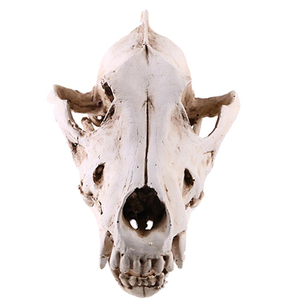 Split Predator Skull Prop Model Resin Replica Unassembled Figurine Statue Crafts