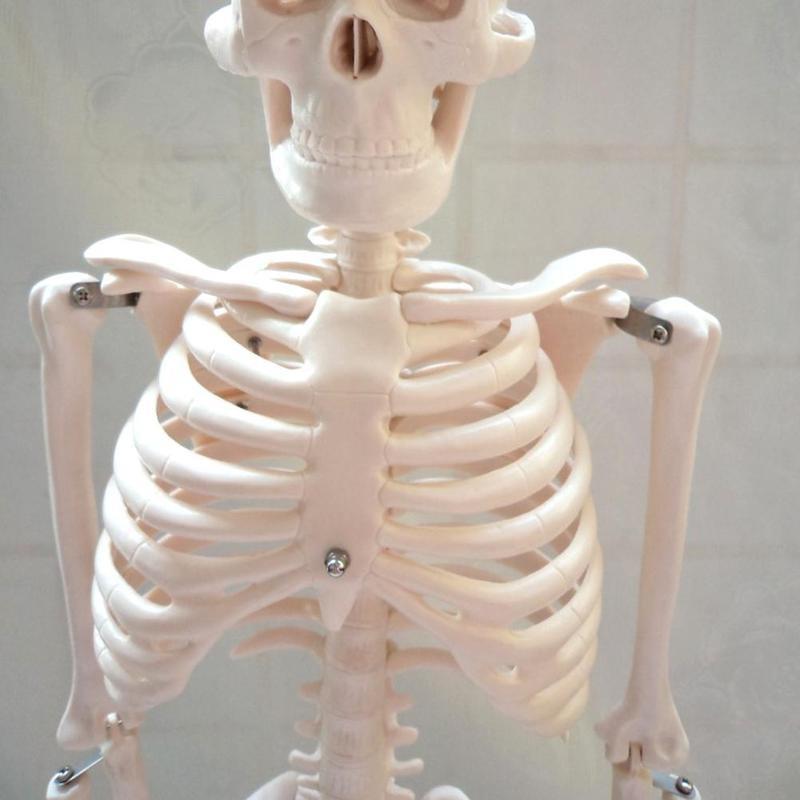 85cm blanco desmontable modelo esqueleto apto para anatomía médica ...
