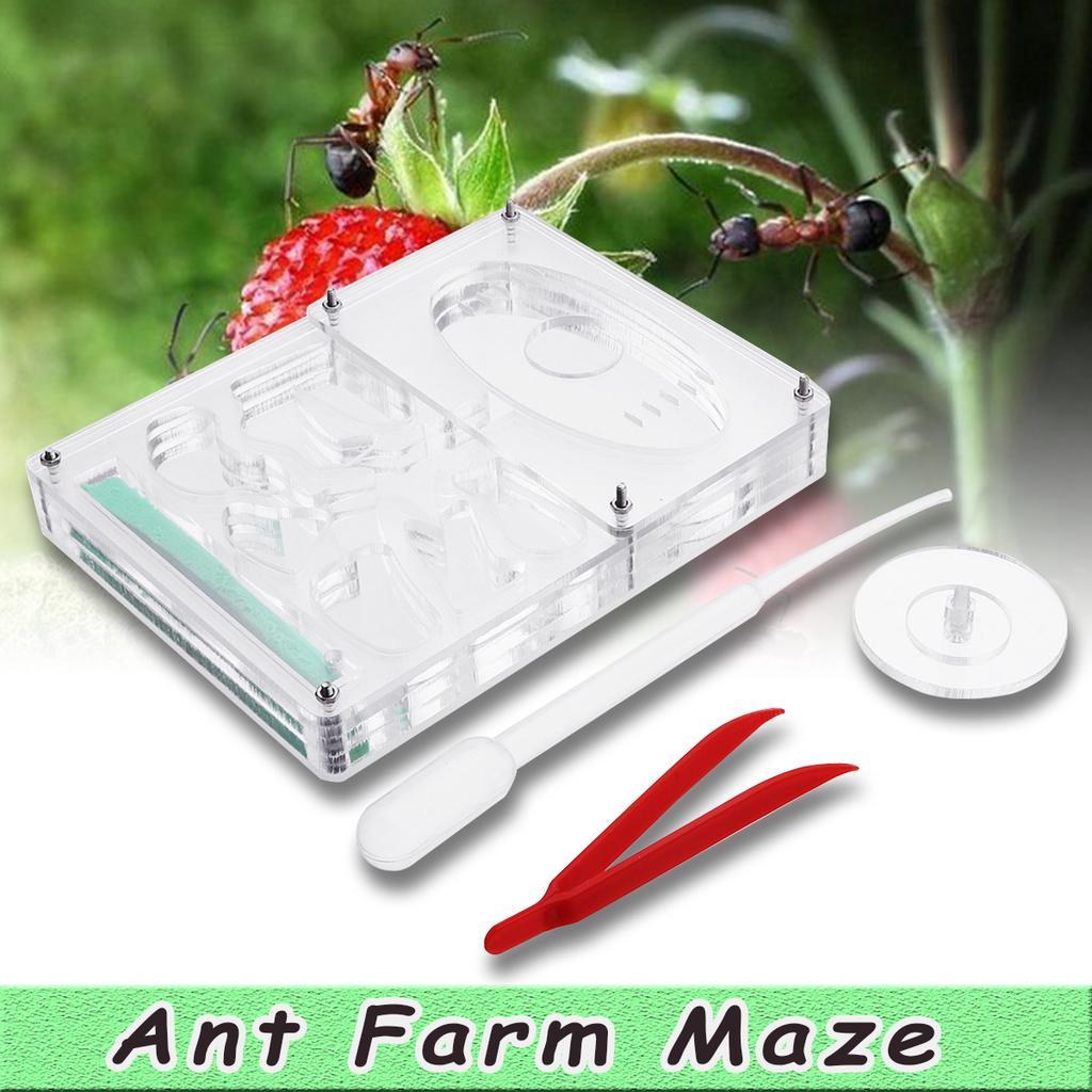NEW  LIVE ants Ant workshop Ant farm New educational for micarium ant nest