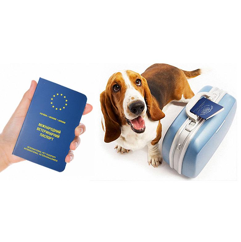 Buy Travel Accessories Pets Products Pet Passport Cover European Cover Passport for Pet Dog Cat at affordable prices — free shipping, real reviews with photos — Joom
