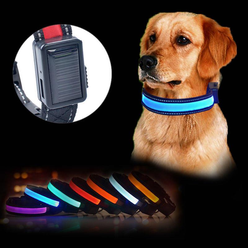 antip/érdida Mascota luz LED Intermitente Luminosa Perro Mothcattl Collar para Perro Collar de Silicona para Mascotas Carga USB Gato