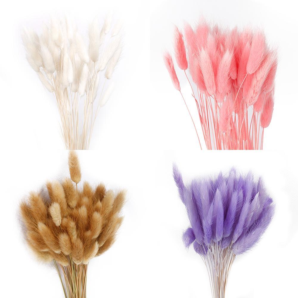 Plant Stems Lagurus Ovatus Dried Flowers Bouquets Bunny Tails Rabbit Tail Grass