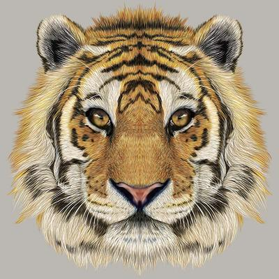 Thermal Stickers Iron On Clothes Tiger Head Thermal Press Vinyl Hoodies Tops Diy A-Level Washable Appliques On Clothes