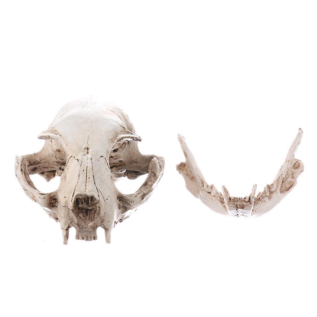 Weiß 1 1 menschlicher Kopf-Schädel-Harz-Anatomische Medical Skeleton
