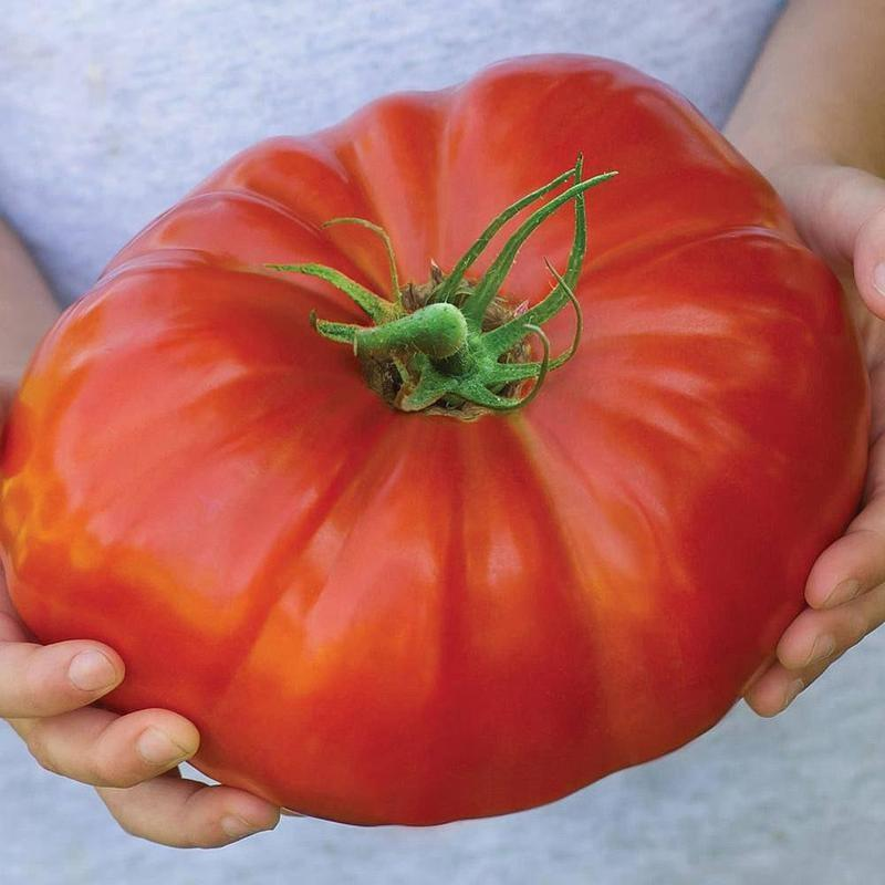 125pcs Red Beefsteak Tomato Seeds Green Fresh Fruit Seed Home Garden Planting