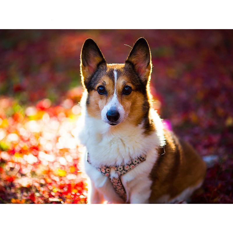 5D DIY Full Drill Diamond Painting Dog Corgi Embroidery Cross Crafts Kit Decor