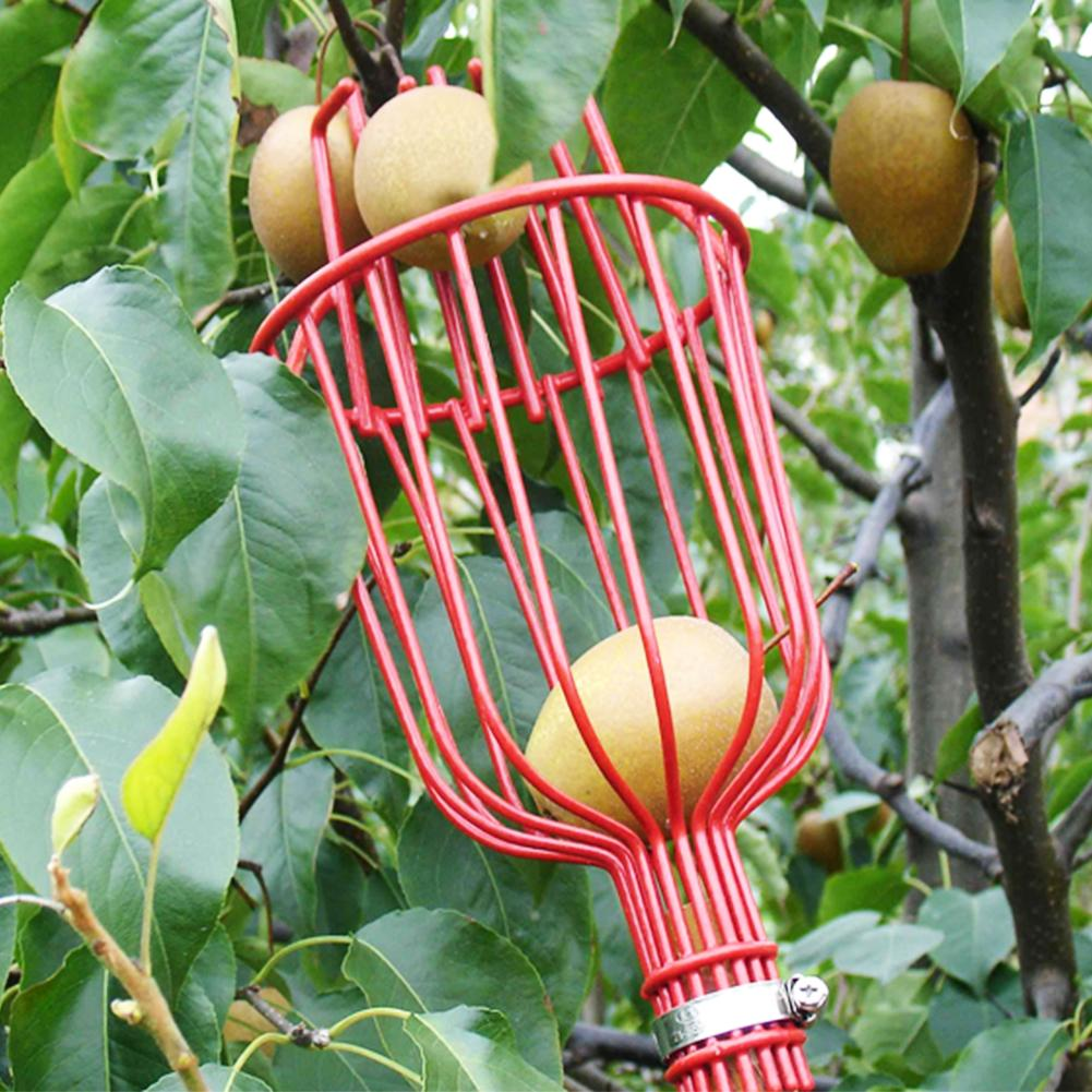 Fresh Fruit Picker Basket Orange Apple Plum Pear Peach Picker Head fits on Pole