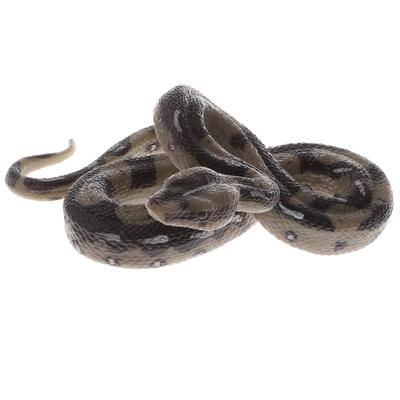 Buy Cheap Boa Constrictor Size Chart Low Prices Free Shipping Online Store Joom